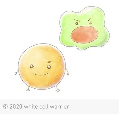 プロフィール|免疫力アップサークル 白血球
